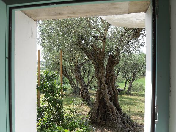 Doorway Olive