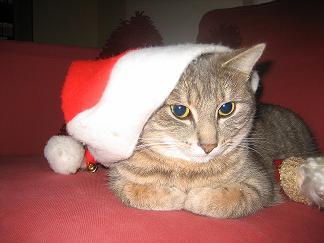 Stella Claus